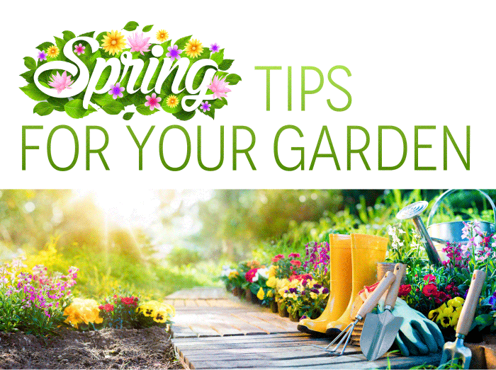 Spring Tips for Your Garden  For those of you who have that green thumb, it's time to get your garden ready for spring. Here are 5 tips to help you out this season.  1. Have a plan: Map your plan out to make sure it works with your landscape.  2. Ensure you have all the gardening tools needed.  3.